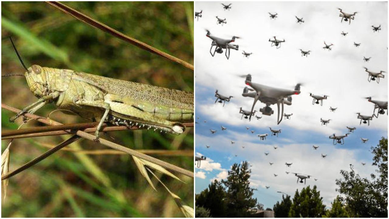 Madhya Pradesh: Drones to be used to eradicate locusts-मध्य प्रदेश : टिड्डियों को खात्मा करने के लिए होगा ड्रोन का इस्तेमाल